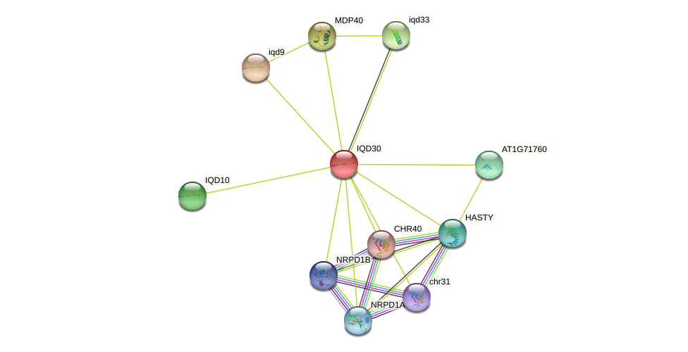 IQD30 protein (Arabidopsis thaliana) - STRING interaction network