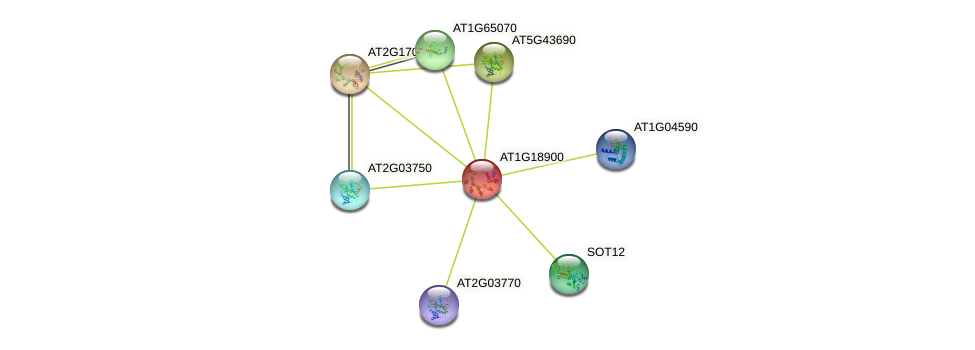 AT1G18900 protein (Arabidopsis thaliana) - STRING interaction network
