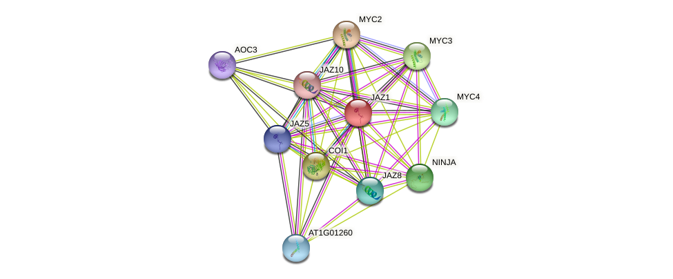 JAZ1 protein (Arabidopsis thaliana) - STRING interaction network