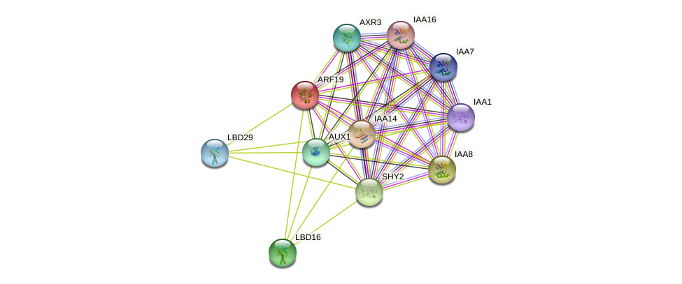 ARF19 protein (Arabidopsis thaliana) - STRING interaction network