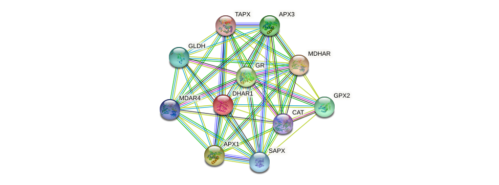 DHAR1 protein (Arabidopsis thaliana) - STRING interaction network