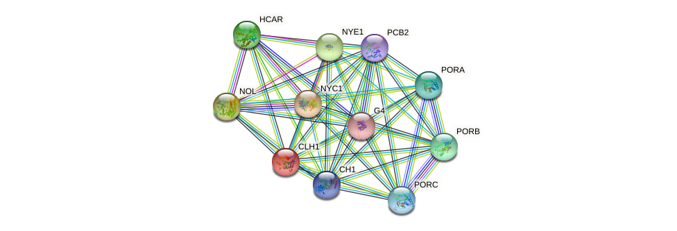 CLH1 protein (Arabidopsis thaliana) - STRING interaction network