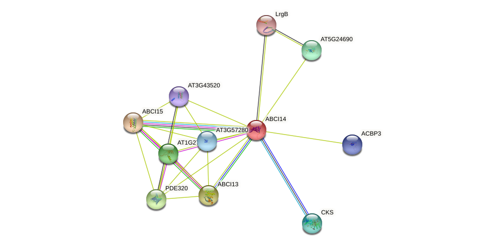 ABCI14 protein (Arabidopsis thaliana) - STRING interaction network