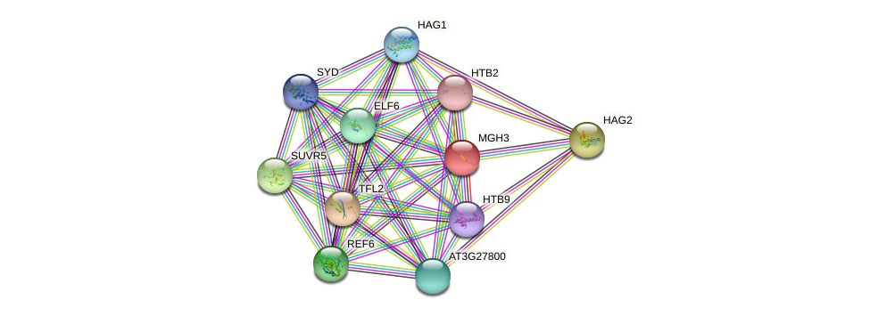 MGH3 protein (Arabidopsis thaliana) - STRING interaction network