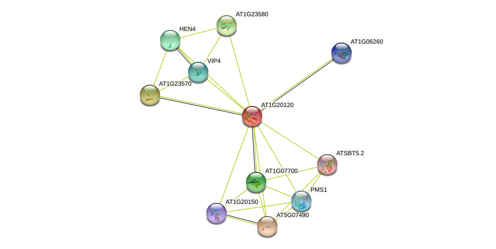 AT1G20120 protein (Arabidopsis thaliana) - STRING interaction network