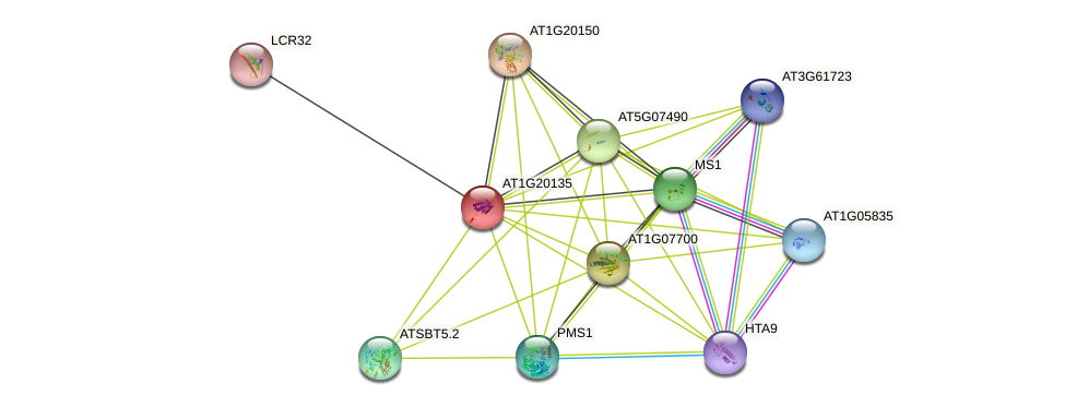 AT1G20135 protein (Arabidopsis thaliana) - STRING interaction network