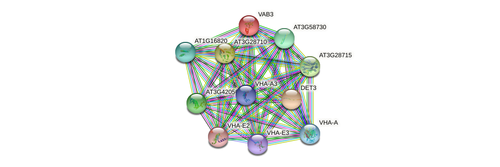 VAB3 protein (Arabidopsis thaliana) - STRING interaction network