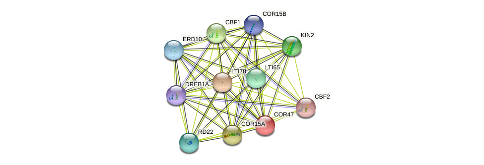 COR47 protein (Arabidopsis thaliana) - STRING interaction network