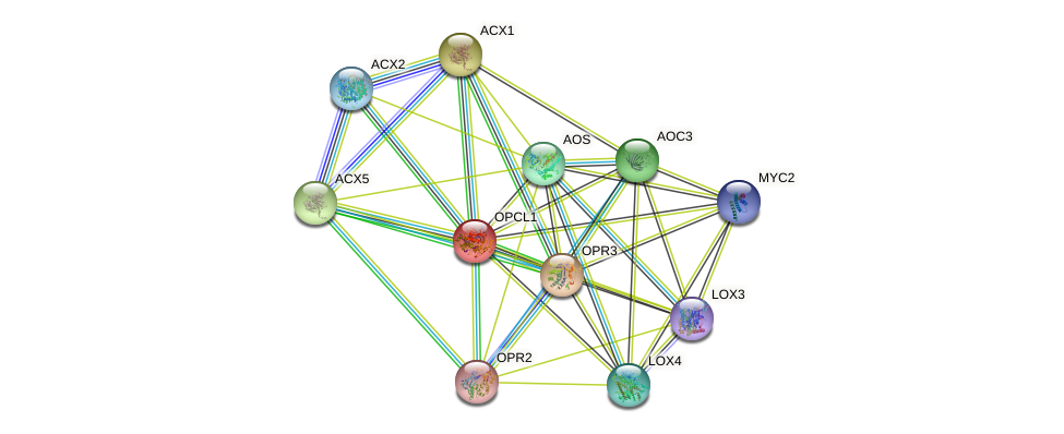 OPCL1 protein (Arabidopsis thaliana) - STRING interaction network