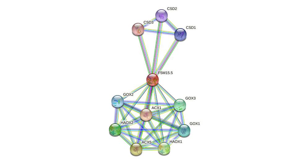 F5M15.5 protein (Arabidopsis thaliana) - STRING interaction network