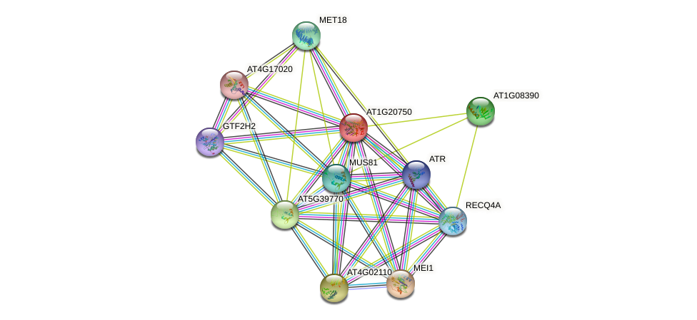 AT1G20750 protein (Arabidopsis thaliana) - STRING interaction network