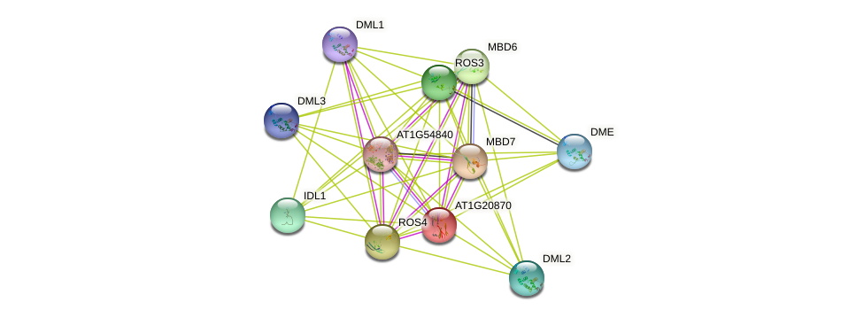 AT1G20870 protein (Arabidopsis thaliana) - STRING interaction network