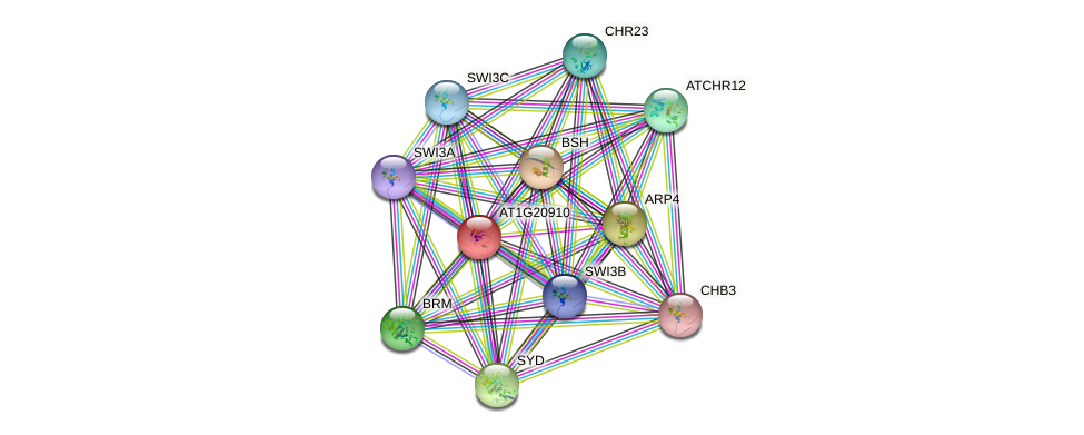 AT1G20910 protein (Arabidopsis thaliana) - STRING interaction network