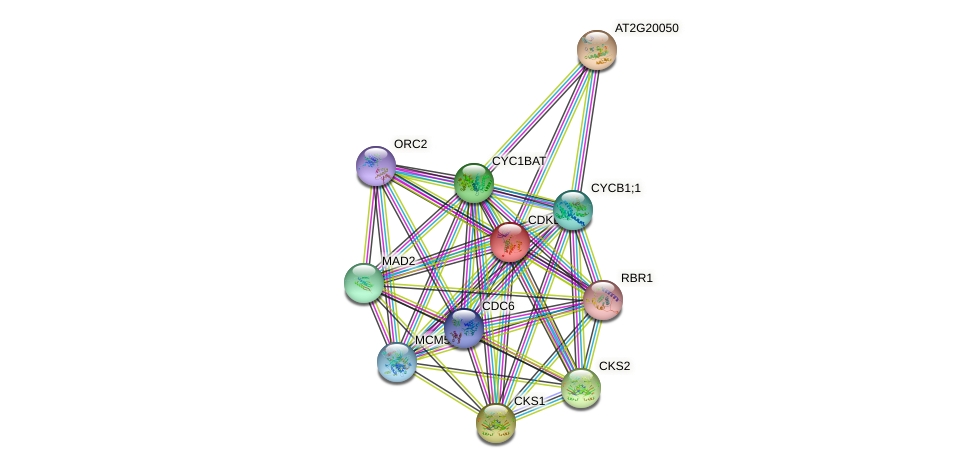 CDKB2;2 protein (Arabidopsis thaliana) - STRING interaction network