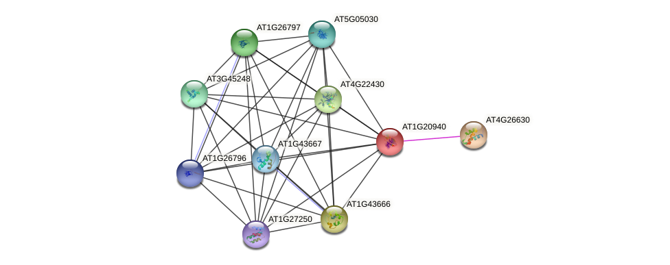 AT1G20940 protein (Arabidopsis thaliana) - STRING interaction network