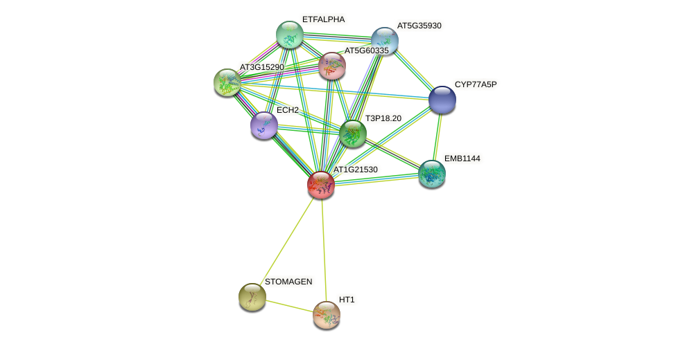 AT1G21530 protein (Arabidopsis thaliana) - STRING interaction network