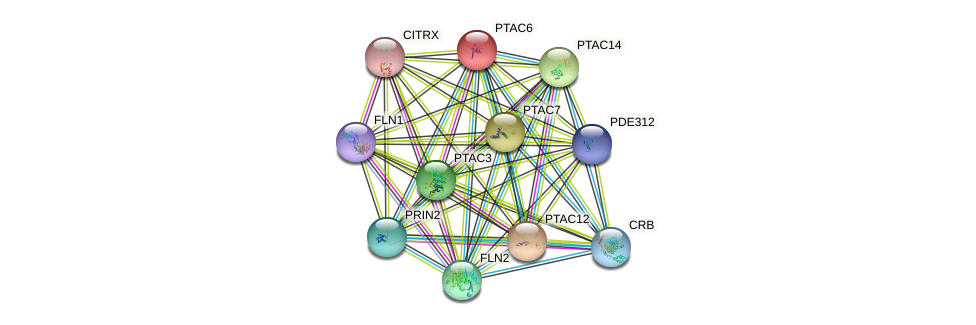PTAC6 protein (Arabidopsis thaliana) - STRING interaction network
