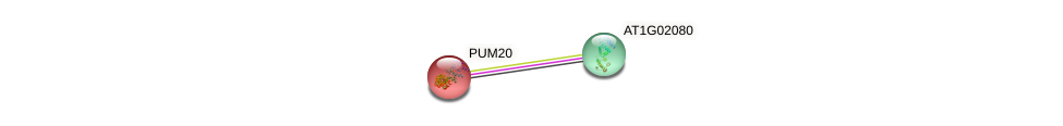 PUM20 protein (Arabidopsis thaliana) - STRING interaction network
