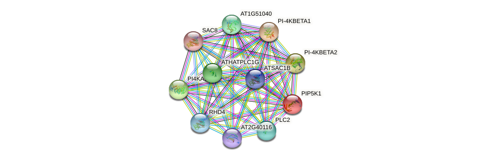 PIP5K1 protein (Arabidopsis thaliana) - STRING interaction network