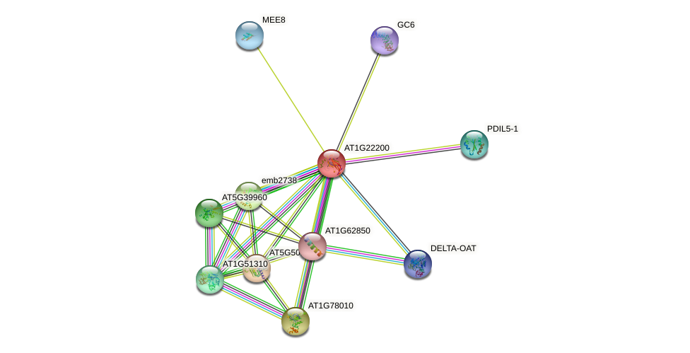 AT1G22200 protein (Arabidopsis thaliana) - STRING interaction network