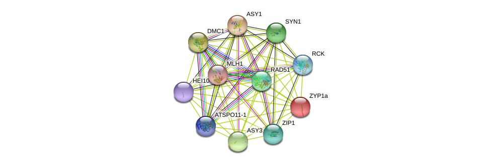 ZYP1a protein (Arabidopsis thaliana) - STRING interaction network