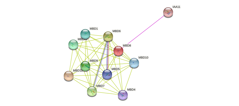 MBD8 protein (Arabidopsis thaliana) - STRING interaction network