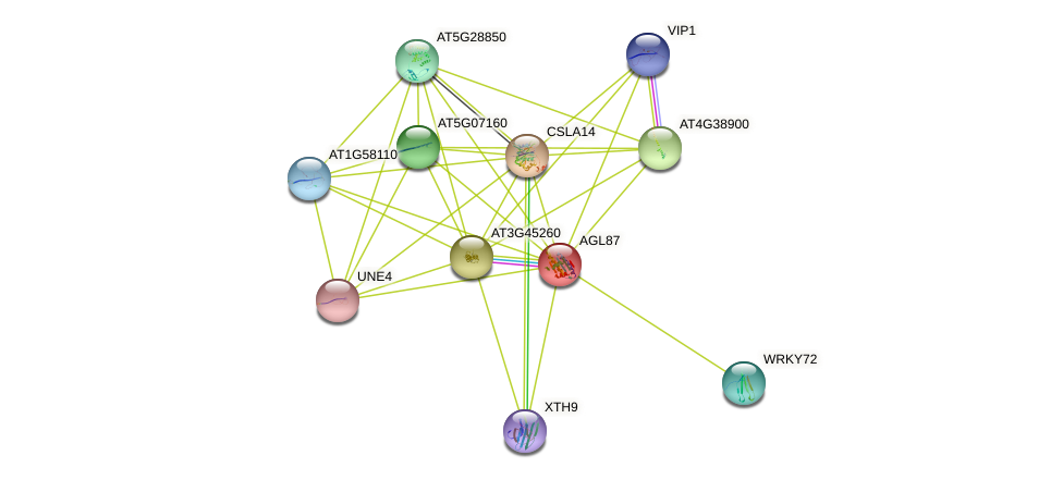 AGL87 protein (Arabidopsis thaliana) - STRING interaction network
