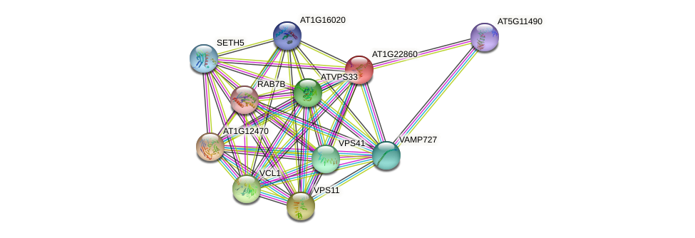 AT1G22860 protein (Arabidopsis thaliana) - STRING interaction network
