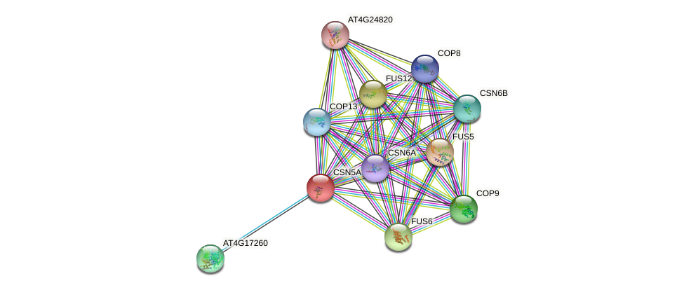 CSN5A protein (Arabidopsis thaliana) - STRING interaction network
