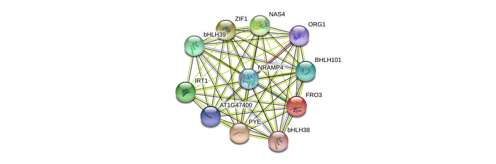 FRO3 protein (Arabidopsis thaliana) - STRING interaction network