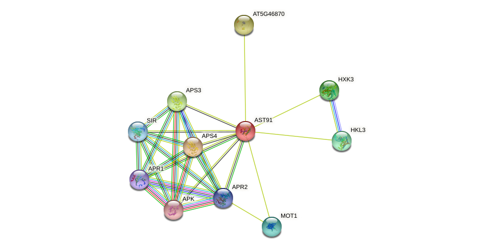 AST91 protein (Arabidopsis thaliana) - STRING interaction network