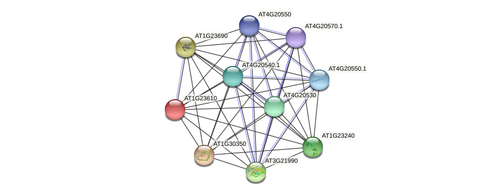 AT1G23610 protein (Arabidopsis thaliana) - STRING interaction network