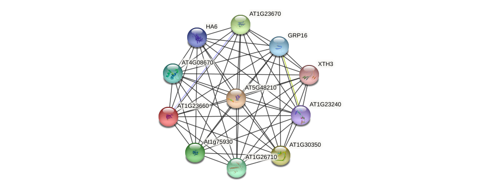 AT1G23660 protein (Arabidopsis thaliana) - STRING interaction network