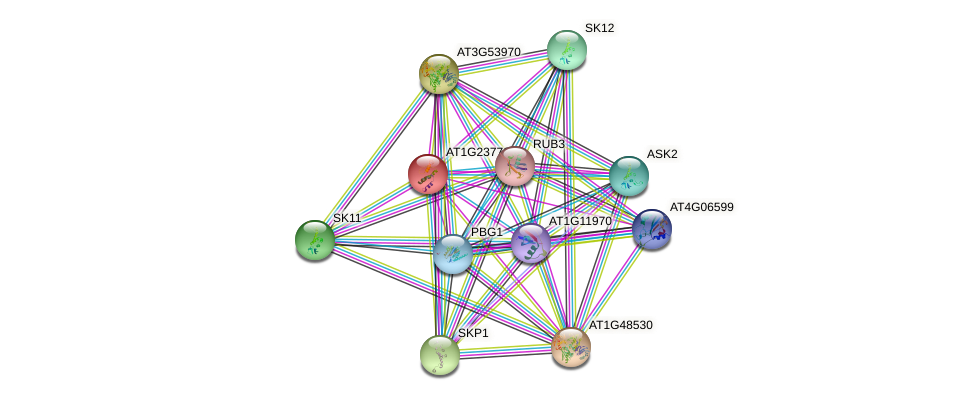 AT1G23770 protein (Arabidopsis thaliana) - STRING interaction network