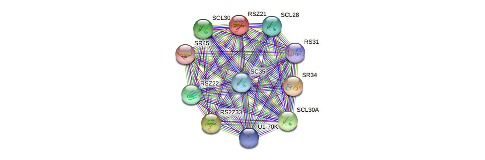 RSZ21 protein (Arabidopsis thaliana) - STRING interaction network