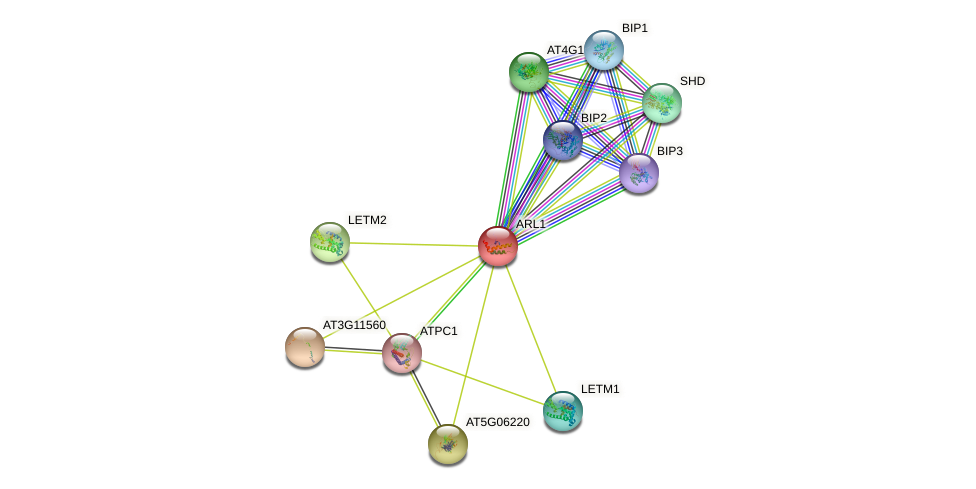 ARL1 protein (Arabidopsis thaliana) - STRING interaction network