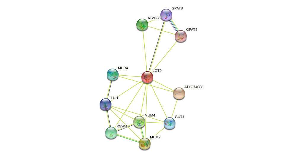 LGT9 protein (Arabidopsis thaliana) - STRING interaction network