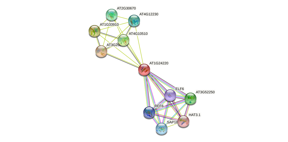AT1G24220 protein (Arabidopsis thaliana) - STRING interaction network