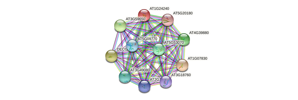 AT1G24240 protein (Arabidopsis thaliana) - STRING interaction network