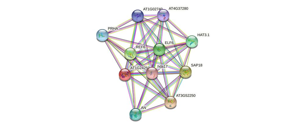 AT1G24250 protein (Arabidopsis thaliana) - STRING interaction network
