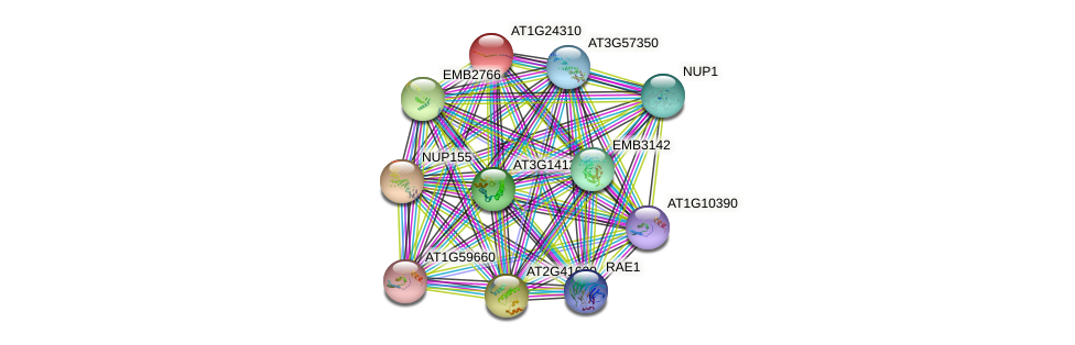 AT1G24310 protein (Arabidopsis thaliana) - STRING interaction network