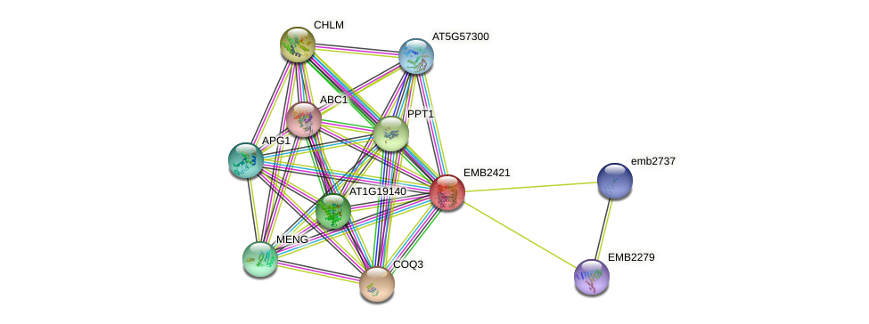 EMB2421 protein (Arabidopsis thaliana) - STRING interaction network