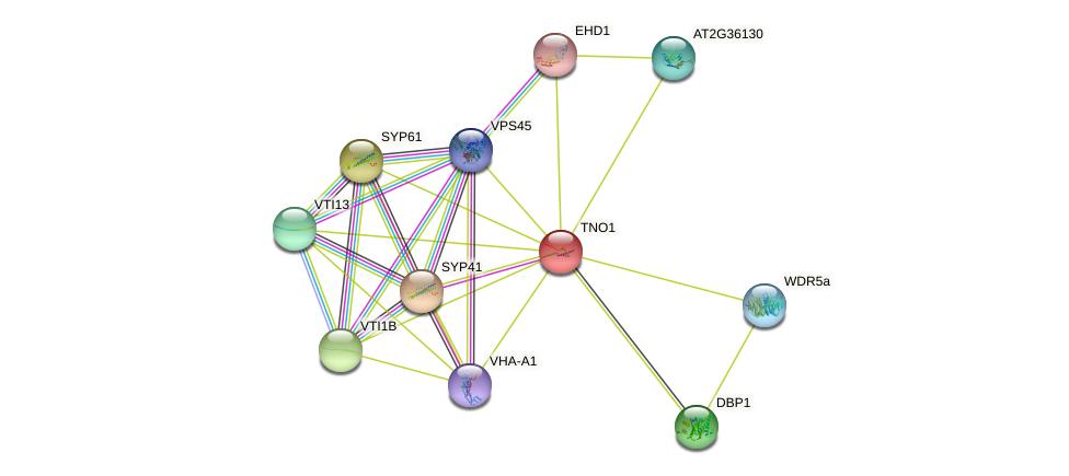 TNO1 protein (Arabidopsis thaliana) - STRING interaction network