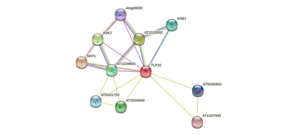 TLP10 protein (Arabidopsis thaliana) - STRING interaction network