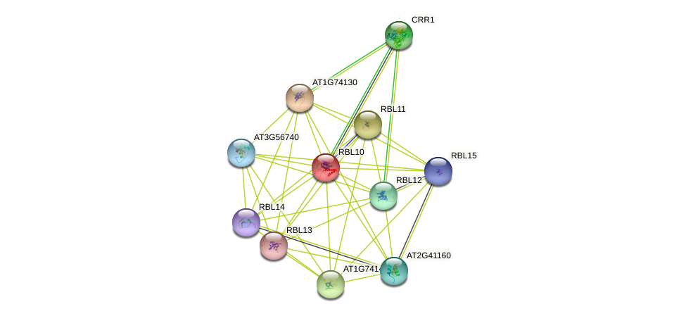 RBL10 protein (Arabidopsis thaliana) - STRING interaction network