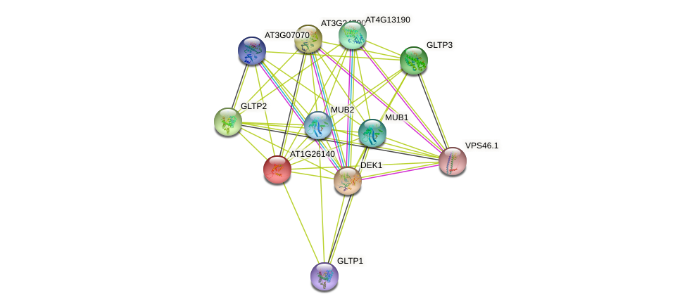 AT1G26140 protein (Arabidopsis thaliana) - STRING interaction network