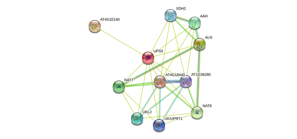 UPS5 protein (Arabidopsis thaliana) - STRING interaction network