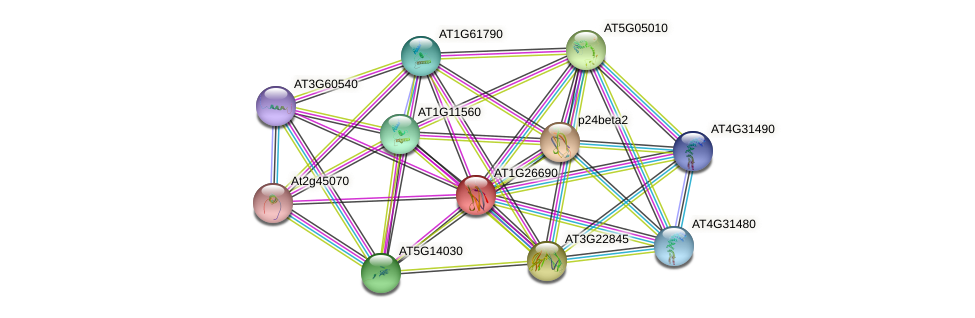 AT1G26690 protein (Arabidopsis thaliana) - STRING interaction network