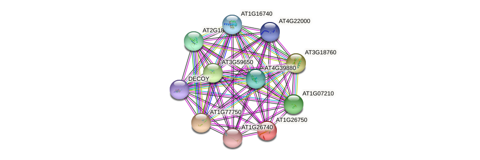 AT1G26750 protein (Arabidopsis thaliana) - STRING interaction network
