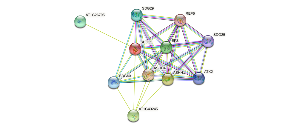 SDG35 protein (Arabidopsis thaliana) - STRING interaction network